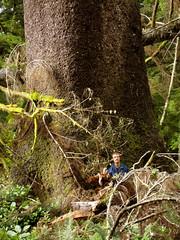 Big ass tree (goo_97) Tags: oregoncoast mateo hugetree