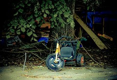 Tricycle (Kevin Berard) Tags: tree is place kodak tricycle easy arbre share ernee z1012