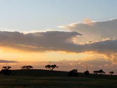 As azinheiras no horizonte (Américo Meira) Tags: sunset portugal silhouette pôrdosol silueta alentejo silhueta puestadelsol coucherdusoleil challengeyouwinner almodôvar