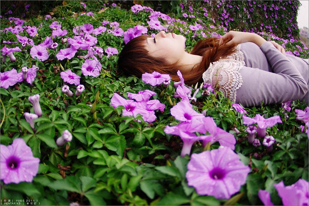 梨寶。紫花記