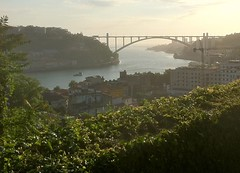 Solar do Vinho do Porto (Digitally Edited) by randubnick