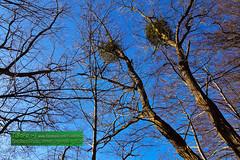 Blick in den Wintersonnenhimmel (TiBoFo) Tags: himmel tibofotinoboczikfoto laubbaum winter bäume germany deu