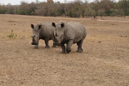 4040195633 064c5f24e7 Mala Mala, South Africa