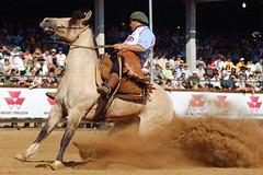 Geada do Pantano Grande (Eduardo Amorim) Tags: brazil horses horse southamerica brasil criollo caballo cheval caballos mare cavalos pferde cavalli cavallo cavalo gauchos pferd riograndedosul hest mares hevonen brsil chevaux gaucho gua guas  yegua amricadosul hst yeguas gacho  amriquedusud  gachos  sudamrica suramrica amricadelsur  sdamerika esteio crioulo caballoscriollos criollos   americadelsud freiodeouro  crioulos cavalocrioulo americameridionale caballocriollo eduardoamorim cavaloscrioulos iayayam yamaiay guacrioula yeguacriolla guascrioulas yeguascriollas