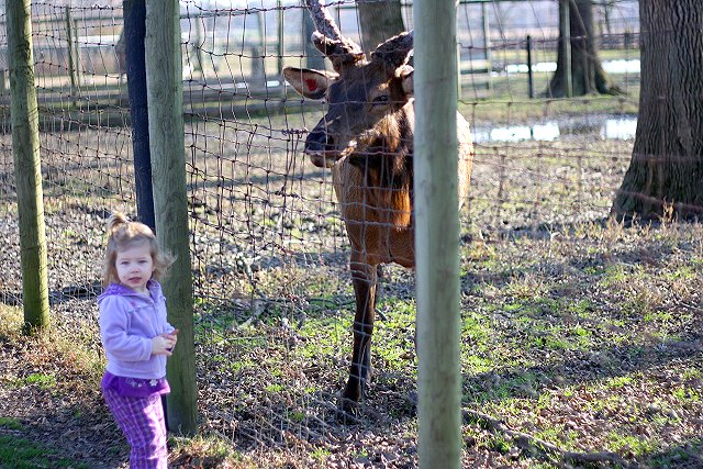 abby and the elk