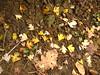 le foglie a manina