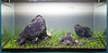 90x45x45cm - Day 1 (Stu Worrall Photography) Tags: red nature cherry aquarium ada tank counter stu drop bubble hc checker planted chrimp dazs braceless worrall tennelus hairgrass stuworrall optiwhite ukaps ukapsorg fiush 90x45x45cm