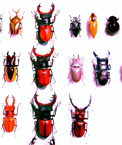 12 nifty beetles