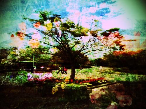 bouble trees