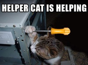 helper-cat-is-helping-lolcat3-300x224