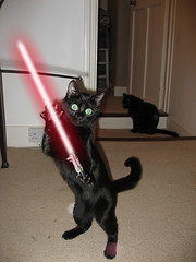 The force is strong with this one (Rachel Schaftybaum) Tags: cat photoshop blackcat starwars lightsaber funnycat