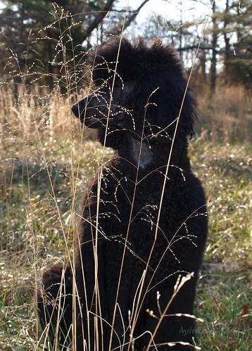 Grass 2/52