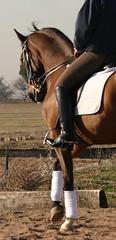 Milord1 (JUANLUBIS) Tags: horses horse sport canon caballo cheval caballos competition cavallo cavalo equestrian equine equus chevaux dressage equitation horserider galope domaclsica dressur equineart