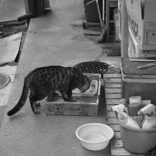 Today's Cat@2010-01-19