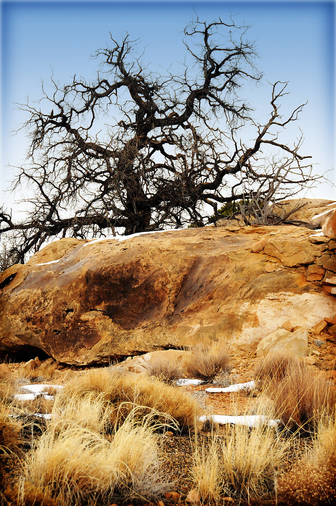 tree in canyonlands and rocks