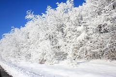 Snow-white!