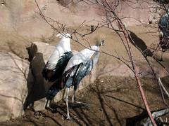 Zoo of Denver  DSCN0018