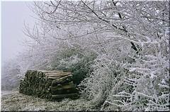 matin frisquet (Excalibur67) Tags: winter film ice nature forest landscape nikon frost fuji hiver nikonf100 arbres velvia paysages argentique givre velvia100f forets dragondaggerphoto yourwonderland