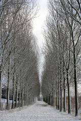 trees in line (JH Photos!) Tags: schnee winter snow netherlands landscape sneeuw canon350d horn landschaft limburg landschap niederlande nederlannd