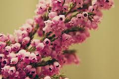 (48/365) Floral Bells