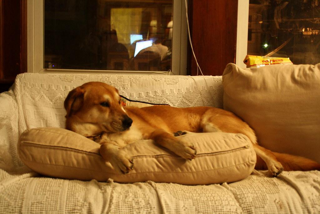 bandit reclining