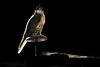 الحر صقر Glow (sahoodvich) Tags: life wild bird animal sport canon fly glow hunting flight arab falcon kuwait ibrahim مركز khaled صقر q8 القنص مقناص بدر برلين البرية ابراهيم الكويت العرب المقناص الفارس barlin شامخ ورشة العمل شاهين حر صيد حمامة طائر gyer حمامه الصيد شوزن فريق التطوعي صقور صقار الصقور محارب جير صقاره مكشات sahoodi البريه الهويدي alsahood sahoodvich الصاهود الصوق alhawedi متصوب