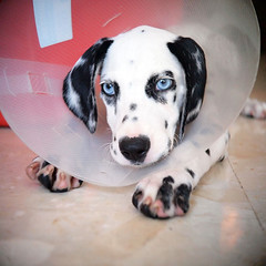 Roamy (brewflower) Tags: dog animal olympus ep2