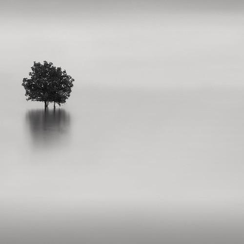 * tree III * by ^soulfly