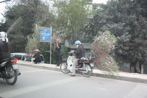 Cherry Blossom Scooters for Tet