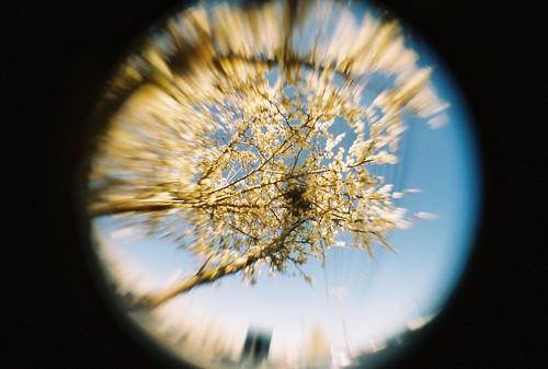 Plum tree w/fisheye