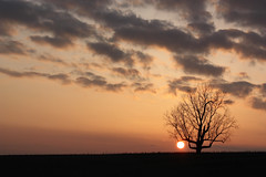 An Ent's Celebration 12/52 (miche11) Tags: sunset sky tree nature clouds platinumphoto thechallengefactory