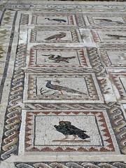 Italica Mozaic Owl (Phizzychick!) Tags: roman owl mozaic italica santiponce