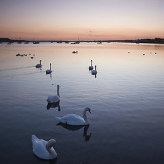 Mudeford Swans (jimi.rose) Tags: sunset reflection water swan horizon quay swans mudeford dorest