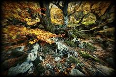 Autumn nightmare (cuellar) Tags: autumn fall season otoño nightmare pesadilla oto hayedo otoo