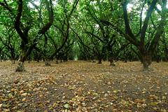 Walnut grove (heidi.swift) Tags: century gourmet metric riding chrisking gourmetcentury