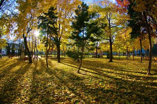 Parc Champlain en or!