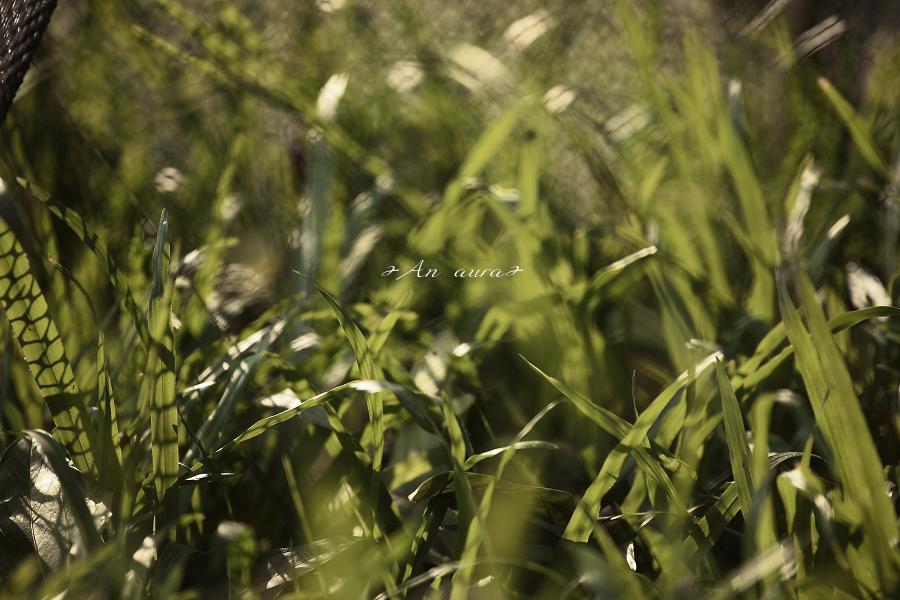 http://farm3.static.flickr.com/2789/4075170545_06aff5aee7_o.jpg