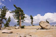 Trees Growing in Granite-Tioga Pass #1.jpg (YOSEMITEDONN) Tags: trees lake reflections tiogapass granitereflections