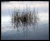 Grass (chefgue) Tags: blue sea reflection water grass schwarzl coolestphotographers