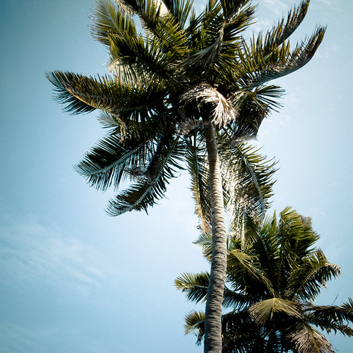 Two Palms, Bahia Honda, 2009