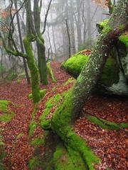 Foggy forest (**MIKA**) Tags: fog forest moss nebel 2009 silvester moos 2010 bavarian biodiversity solla wackelstein nationalparkbayrischerwald