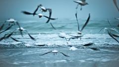 Winter seagulls (iryna_beata) Tags: blue sea seagulls beach birds fly spirit odessa blacksea platinumheartaward spiritofphotography