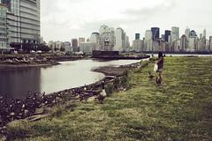 (ohokaybye) Tags: newyorkcity newyork newjersey jerseycity manhattan hudsonriver canadiangeese hudsoncounty morriscanalpeninsula