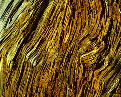 segni del tempo (saro vet) Tags: olympus pino sicilia madonie gibilmanna olympuse410 veterinarifotografi rosariomoscato