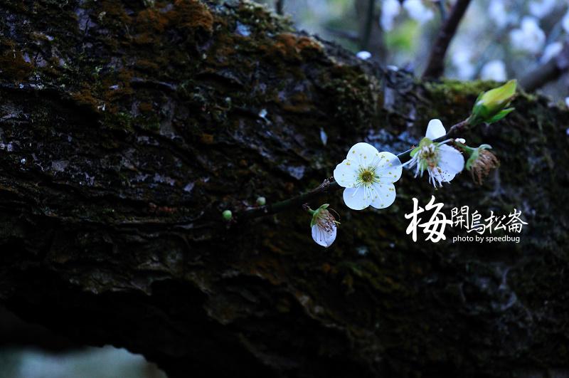 梅開烏松崙  (3).jpg