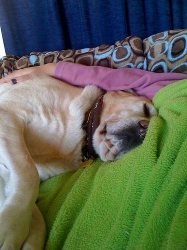 Sadie snuggles