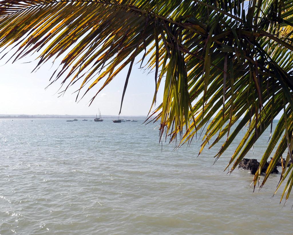 Day 4 - Jambo, Tanzania!
