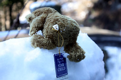 a bear in snow (torisan3500) Tags: japan tokyo