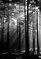 Morning Mist (Andy39Smith) Tags: wood morning trees light sun sunlight mist tree fog forest woodland bracknell bracknellforest bej daarklands daarklandsexcellence