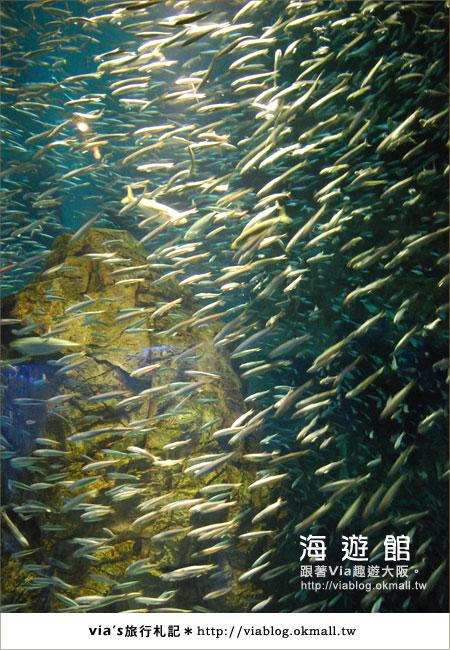 【via關西冬遊記】世界最大極的水族館~大阪海遊館24